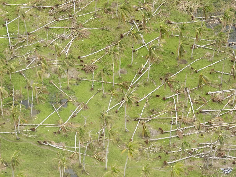 aerial_palm_trees